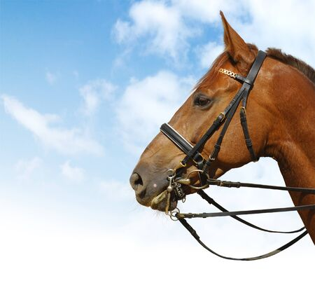 bridle: dressage - equestrian sport Stock Photo