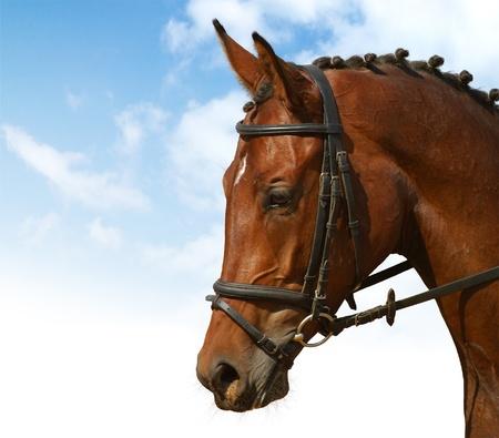 Dressur - Pferdesport Standard-Bild