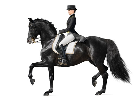 Equestrian sport - dressage (isolated on white) photo
