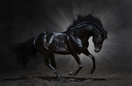 Black Andalusian stallion gallops on dark background