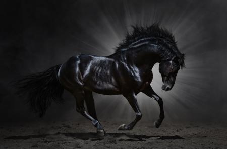 Black Andalusian stallion gallops on dark background