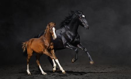 yegua: Galopando yegua con potro en fondo oscuro