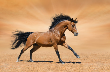 Galloping bay horse on gold background
