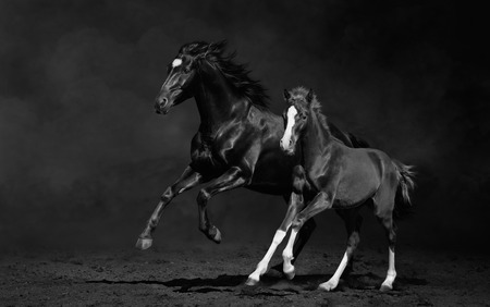 Galloping mare with foal on dark background