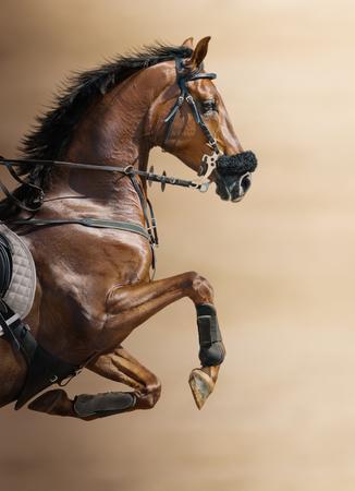 栗ぼやけた背景上、hackamore の馬でジャンプのクローズ アップ