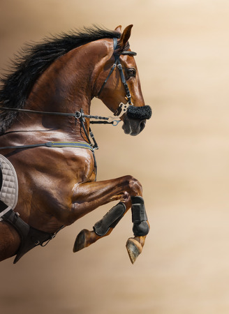 horse jumping: Close-up of chestnut jumping horse  in a hackamore on blurry backgrounds