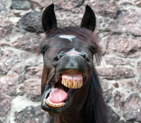 Portrait of funny yawning horse