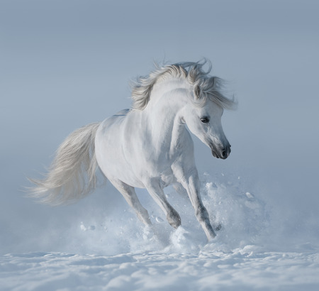 snowfield: White horse on snowfield Stock Photo