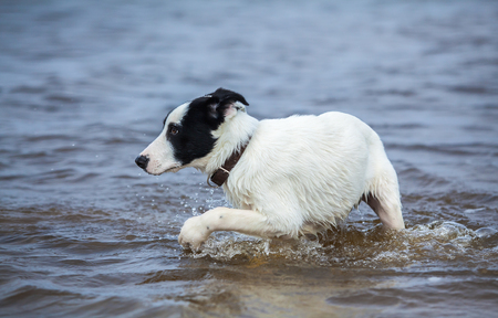 watchdog: Puppy of watchdog is afraid of water. Dog bathes for the first time. Stock Photo