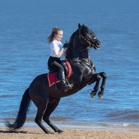 Rearing Andalusian black stallion and happy young woman on beach.