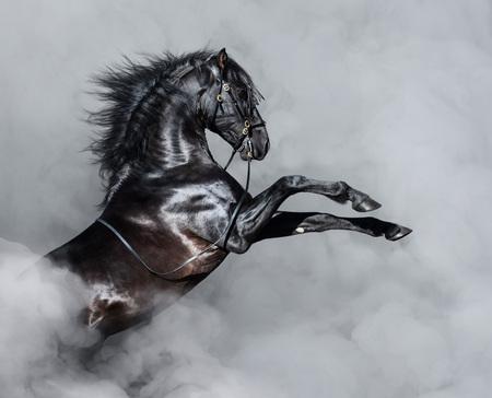 Cría de caballo andaluz negro en humo ligero.
