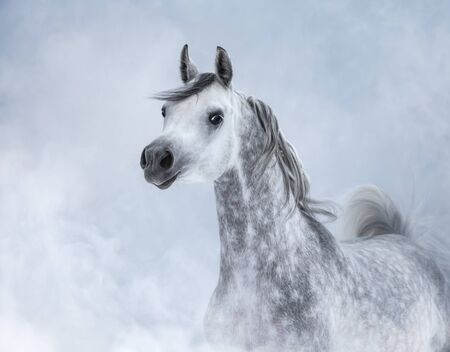 Portrait of dapple dray Arabian horse in light smoke.