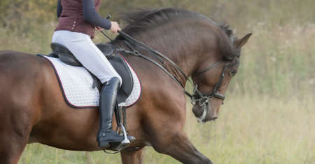 Horsewoman riding horse. Profile of female rider and her bay horse. Stock Photo