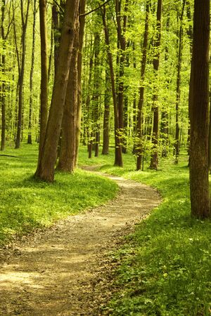 Landscape of quiet wood in spring with little track Stock Photo - 9406198