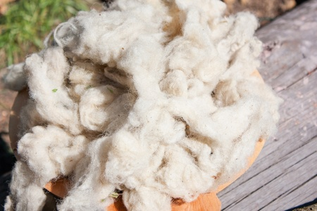 Raw wool ready to be transformed Stock Photo