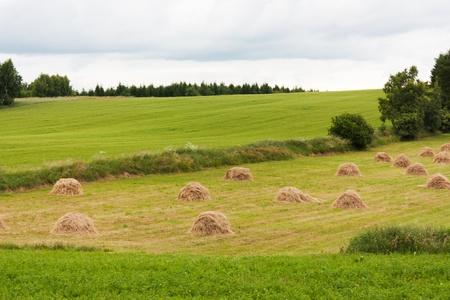 Agricultural landscape in Czech Republic, Europe photo