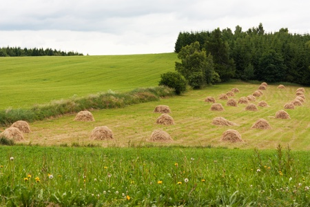 Agricultural landscape in Czech Republic, Europe Stock Photo - 9769935