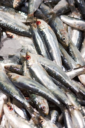 fishery: Fresh sardines, just caught,t for background
