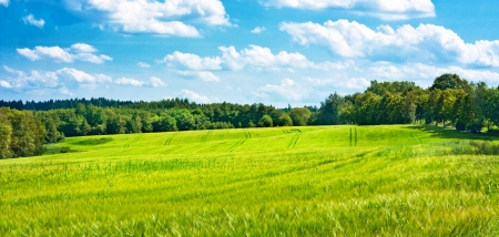 undulating: Barley fields undulating the middle of woods and cloudy blue sky Stock Photo