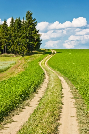 Landscape composed of a winding road, field and cloudy blue sky Stock Photo - 14502302