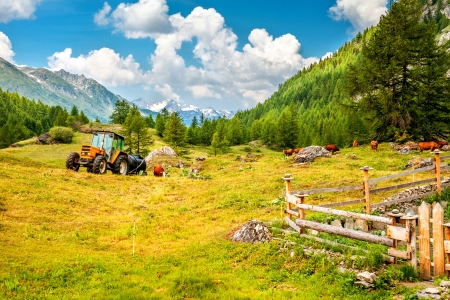 A farm in the Alps, with a tractor and a herd of cows and mountains n in background