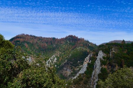 kings canyon national park: Sequoia Vista Stock Photo