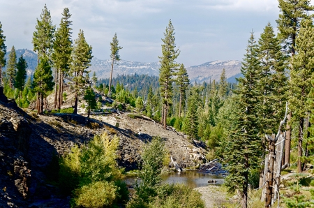 mammoth lakes: Forest scene in the Devils Postpile National Monument