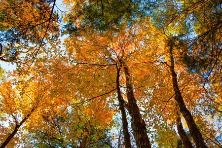 seneca: Scene from trails near Seneca Rocks, West Virginia in the Fall