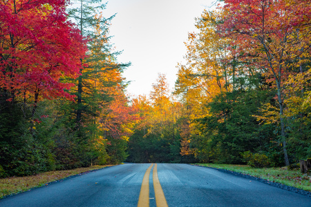 A two lane road through Blackwater Falls State Park during autumn