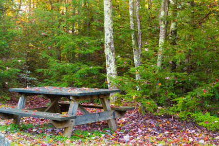 A picnic table in the forest