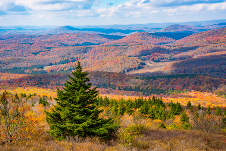 Overlooking the Monongahela National Forest from Spruce Knob