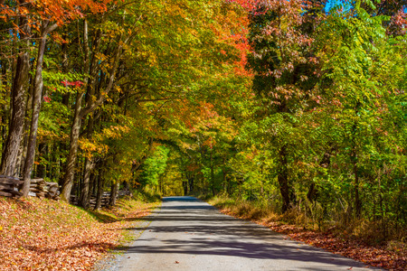 surrounded: A road in the forest surrounded in colorful fall foliage