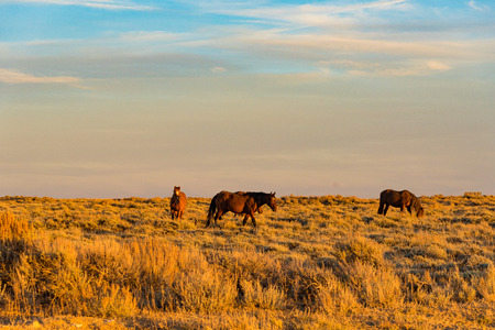Scenic Byway in Wyoming at sunset Stock Photo