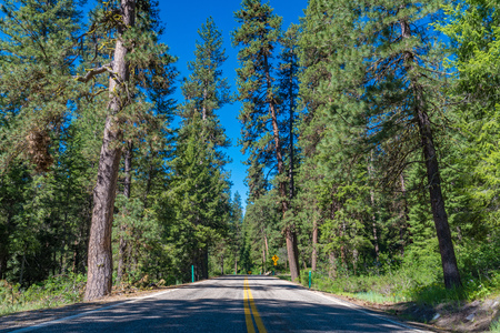 sawtooth national forest: A view of the Ponderosa Pines Scenic Byway, Idaho