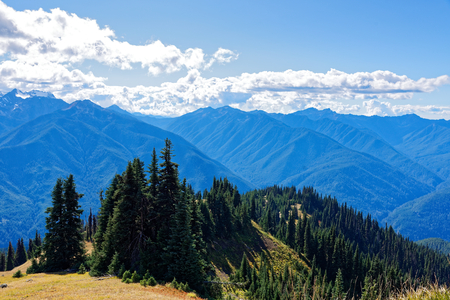 Scenery along the Hurricane Hill Trail, Olympic National Park