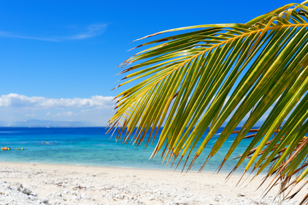 Palm tree on a white sandy beach in Fiji 版權商用圖片