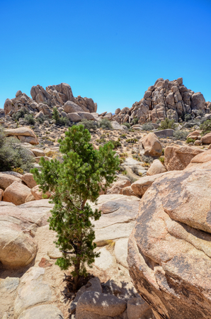 Boulders and a tree in Joshua Tree National Park, California