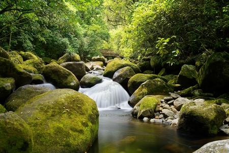 Waterfall on the Wairere Falls Trail, Waikato, New Zealand