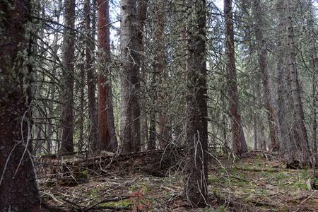 Dense forest in Rocky Mountain National Park, Colorado Reklamní fotografie