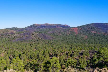 Ponderosa pine forest near Flagstaff, Arizona Фото со стока
