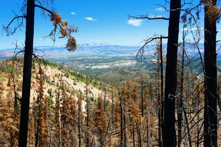 Forest after a controlled burn in Bryce Canyon National Park