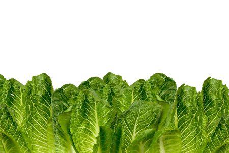 nonfat: Romaine lettuce border isolated over white