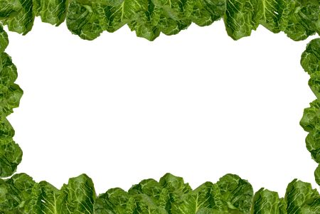 Romaine lettuce border isolated over white