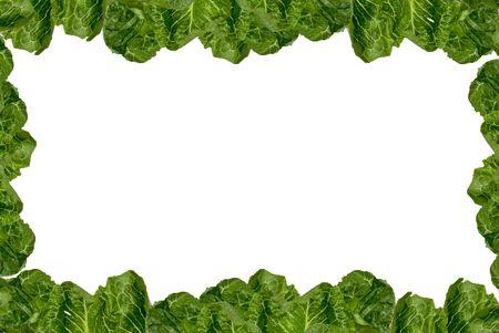 romaine: Romaine lettuce border isolated over white