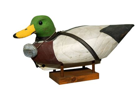 decoy: Hand carved Mallard Drake Decoy Duck isloated over white