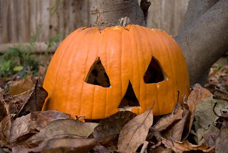 puckered: Old shriveled jack-o-lantern pumpkin sitting in a pile of fall leaves Stock Photo