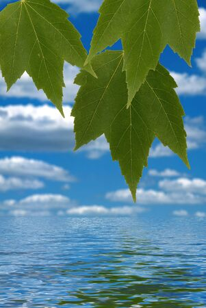 Green leaves over simulated water reflection Stock Photo - 2125880