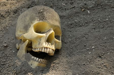 Human skull half buried in the earth