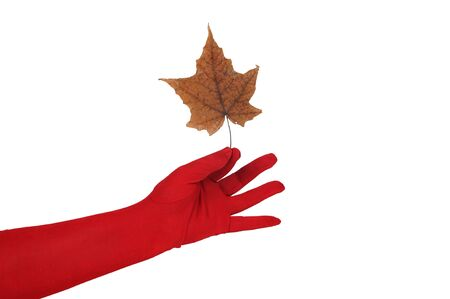 화이트 동안 고립 된 빨간색 낀 손으로 개최되는 줄기와 가을 잎