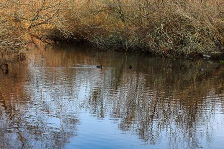 ducks swimming near bushes